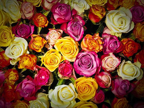 Flower-Shop-Profitable