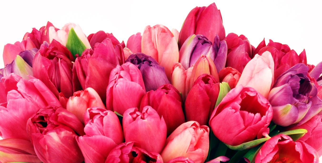 flowers-shop