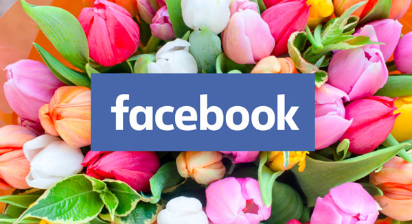 Facebook Search For Florists