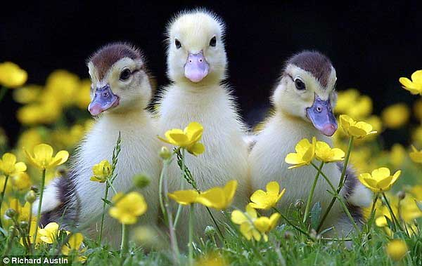 Ducks-Flowers-Magic