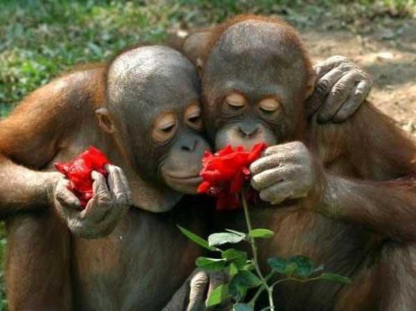 Monkey-Roses