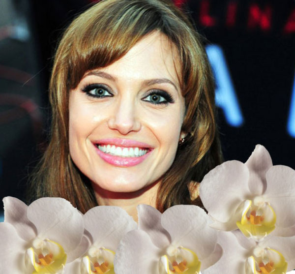 Angelina-Orchid