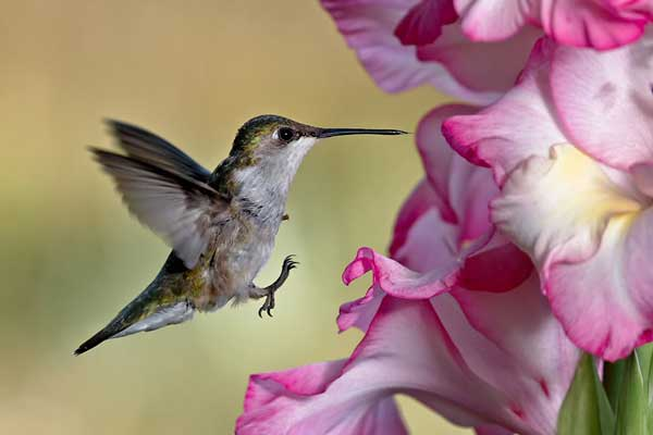 Hummingbird-Flower