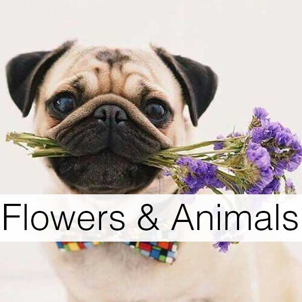 Flowers-Animals-Photo1