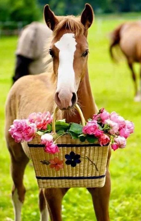 Horse-Flowers