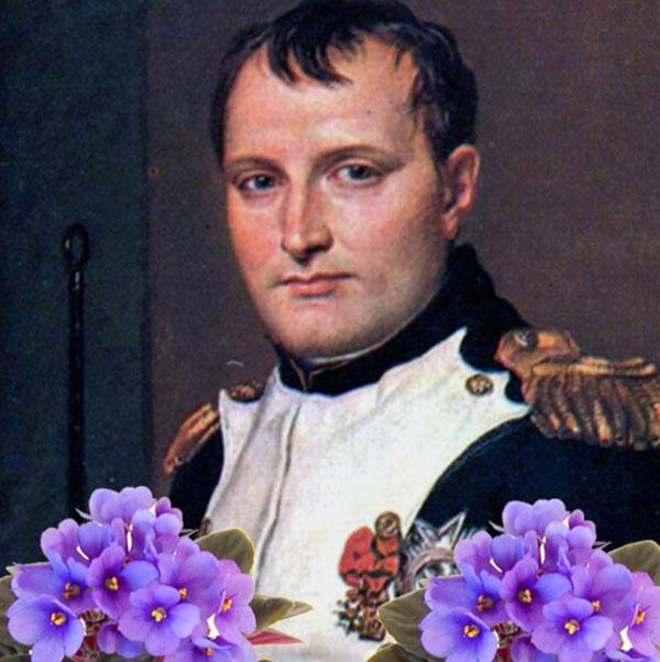 napolean-Violet