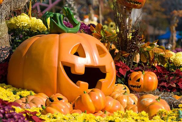 Florist-Halloween-Pumpkins-Mums