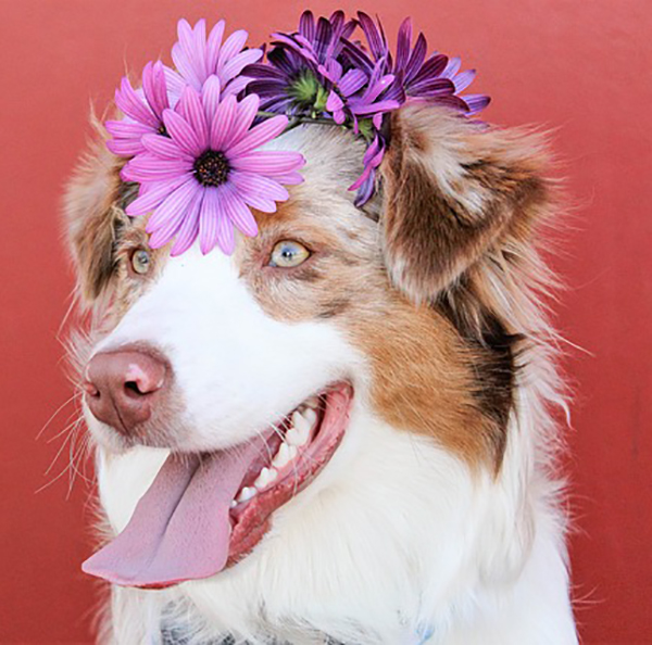 pets-flowers