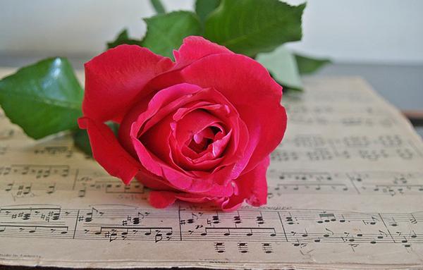 flower-music