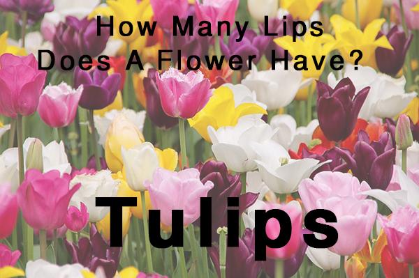 tulips-florist-joke