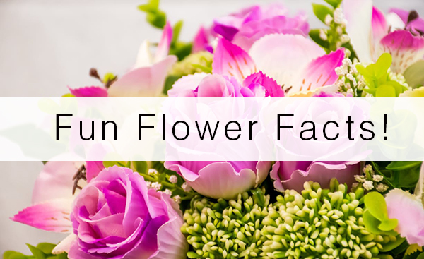 fun flower facts