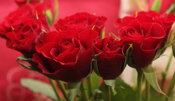 dozen-roses-florist-prep