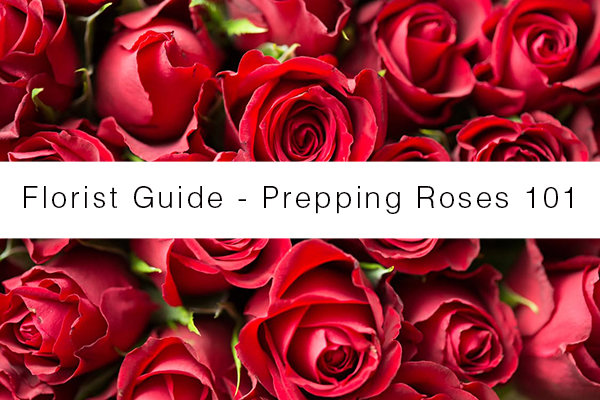 florist-guide-rose-prepping-101
