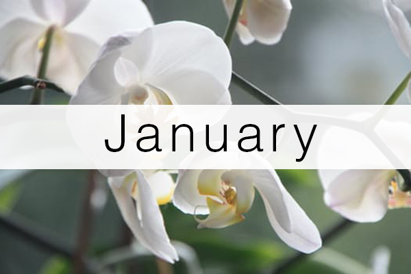 january-florist-flowers-schedule