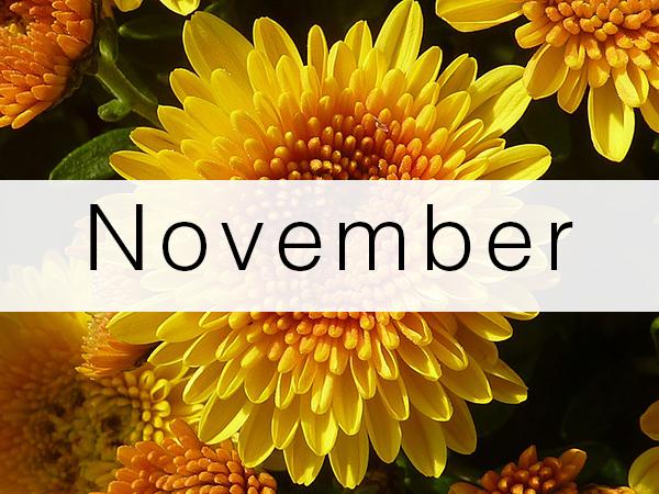 november-florist-flowers-schedule