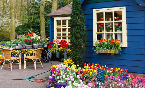flower-shop-images