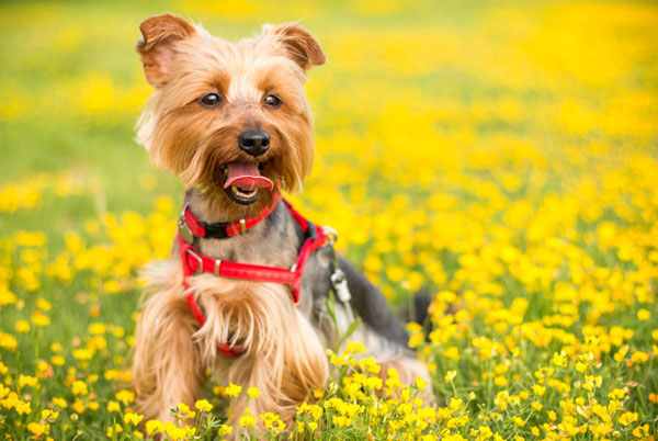 florist-dog-flowers