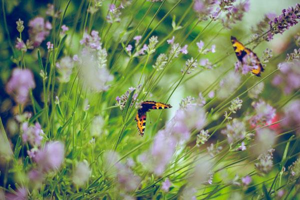 florist-garden-inspiration
