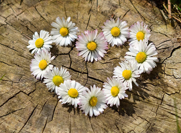love-florist-flowers