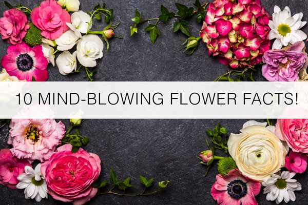 mindblowing-flower-facts