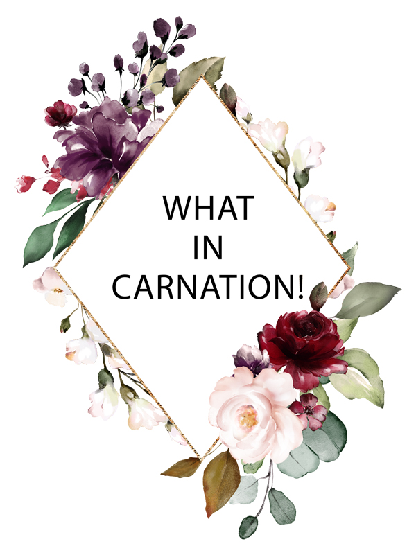 what-in-carnation