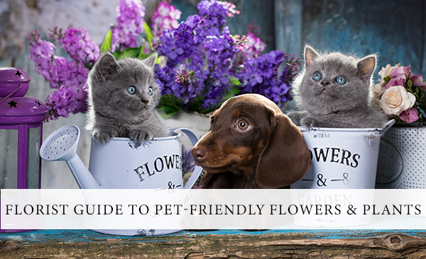 pet-friendly-flowers-plants