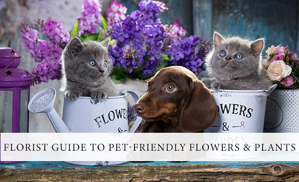 pet-friendly-flowers-plants