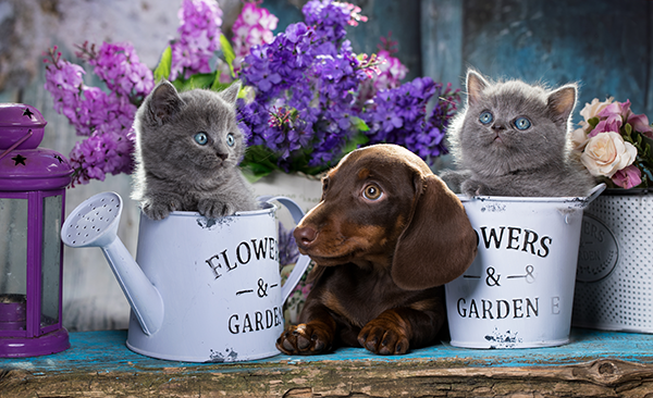 pet-friendly-plants-flowers