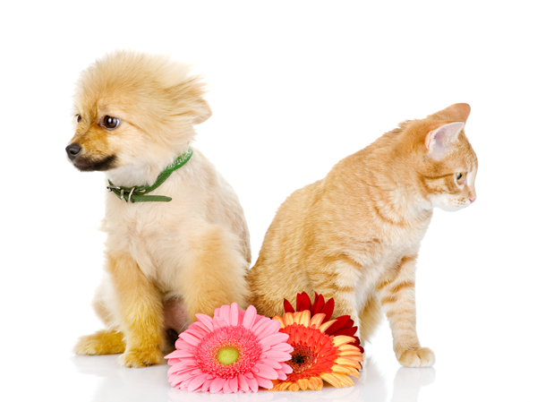 pets-friendly-florist