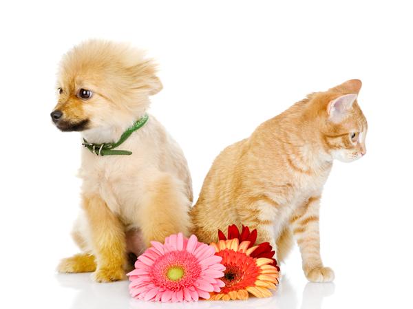 pets-friendly-florist
