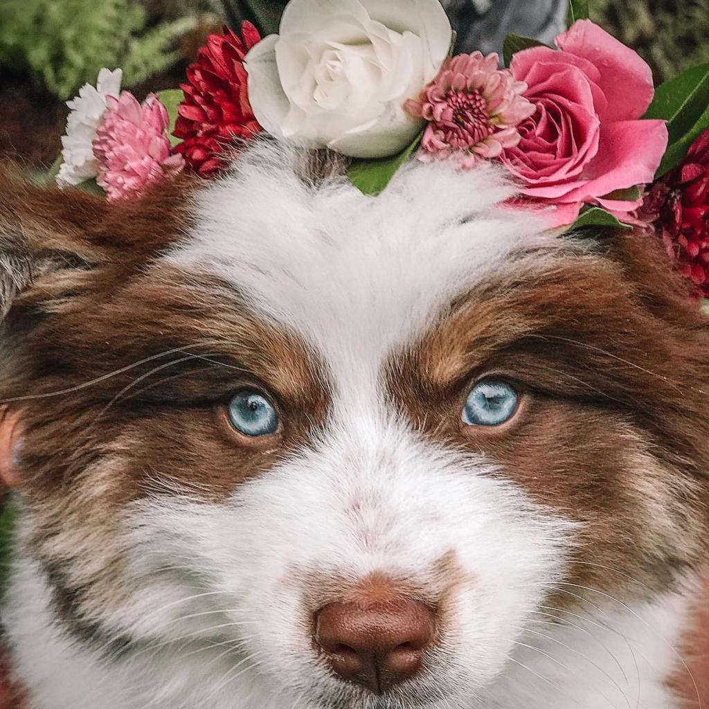Flower Pet shop