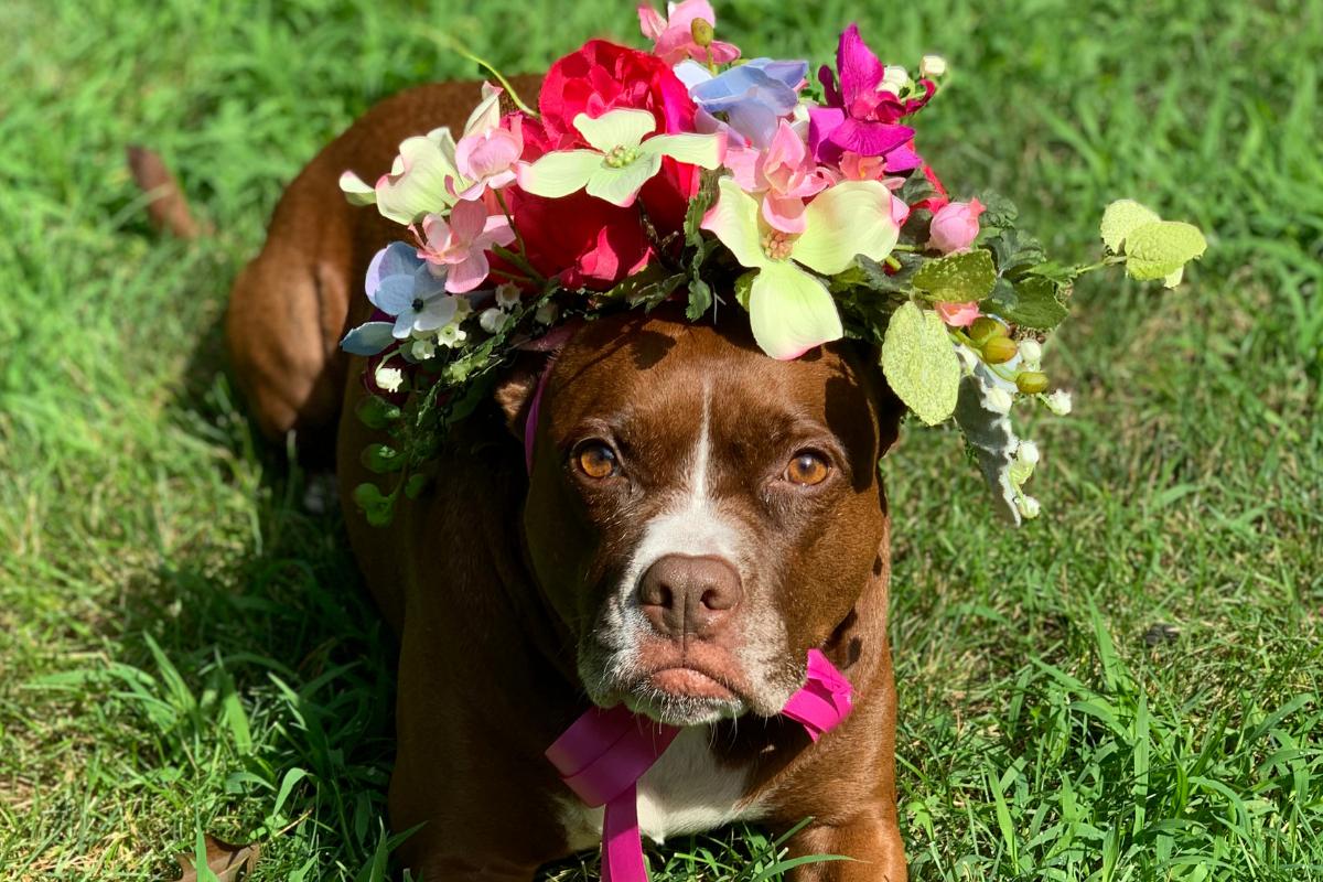 Flower Shop Pet